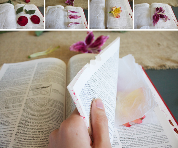How-to-Press-Flowers7